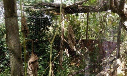 Secretaria do Meio Ambiente de Ribeira do Pombal realiza soltura de animais silvestres apreendidos em Santa Luz-BA